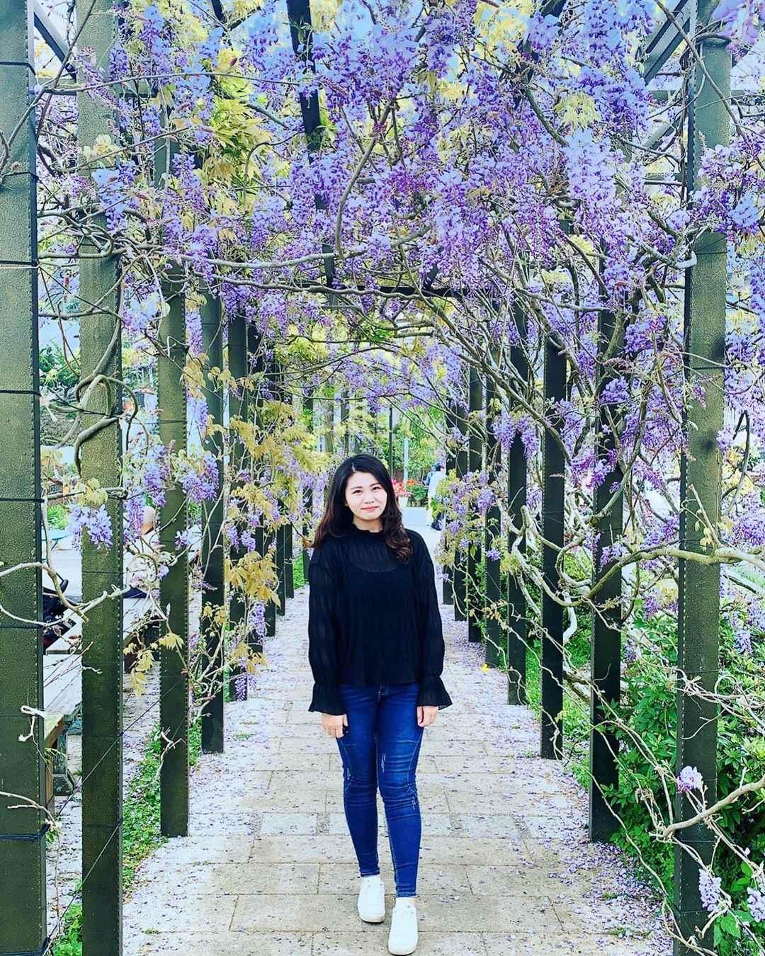 阿里山瑞里紫藤花
