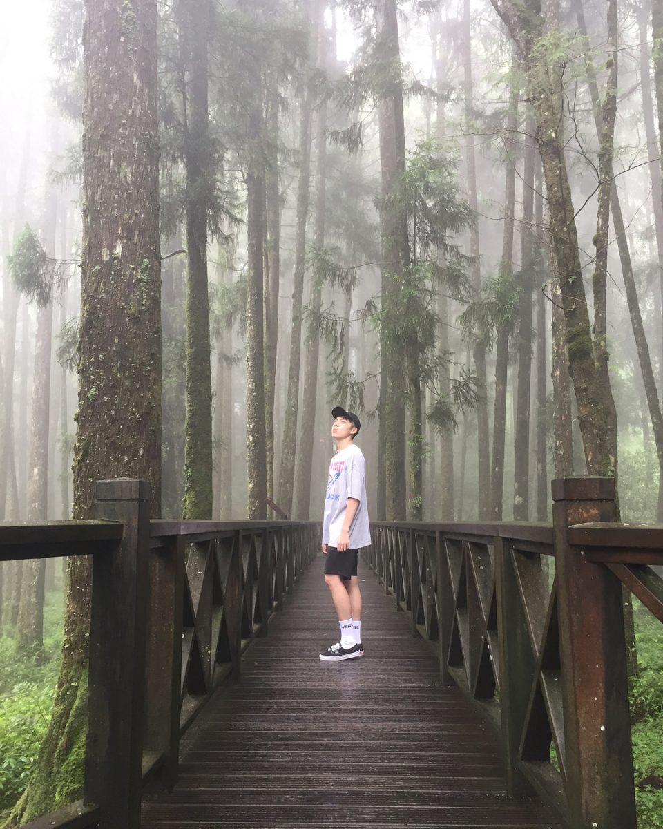 阿里山森林遊樂區景點推薦 巨木群棧道