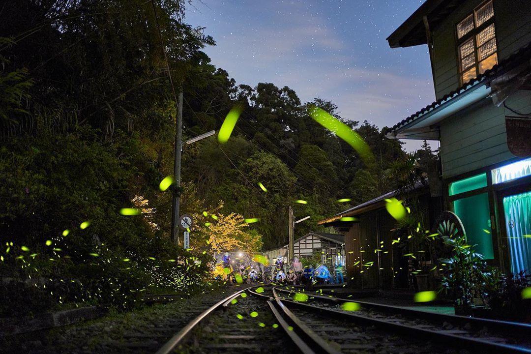 阿里山小火車訂票攻略 | 懶人包攻略,本線及支線票價、站點、訂票一篇搞定
